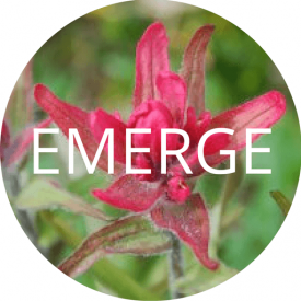 EMERGE PACKAGE